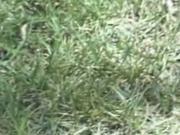 Having Fun On The Lawn